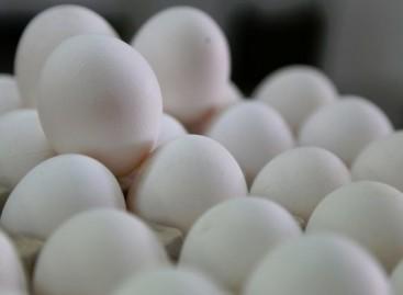 El huevo no causa daños cardiovasculares a diabéticos: estudio