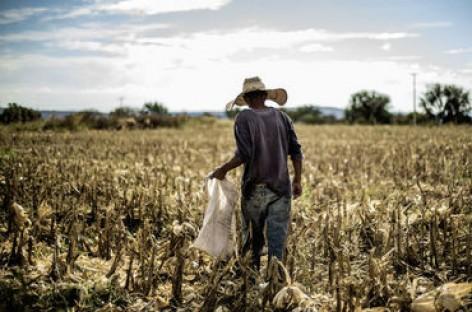 La UNAM desarrolla método para mejorar cosechas de maíz