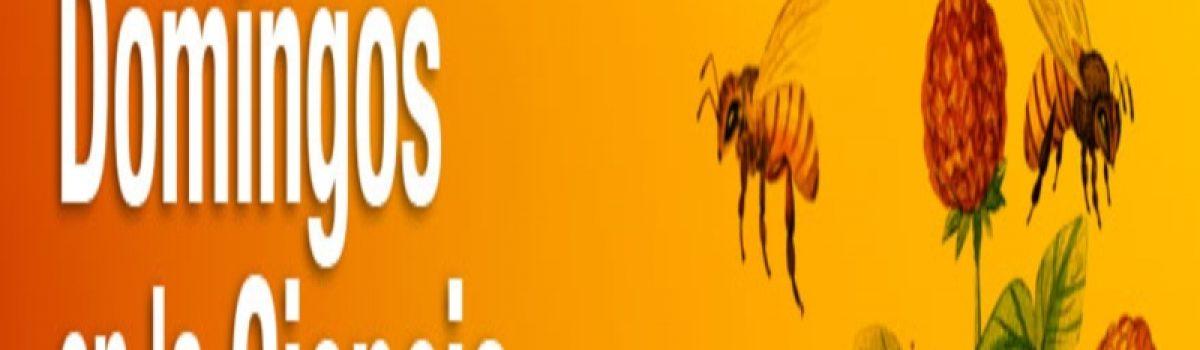 El manejo de las abejas que no pican entre los mayas