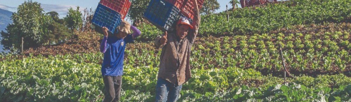Desarrollo sostenible y Buen vivir en el pensamiento latinoamericano actual