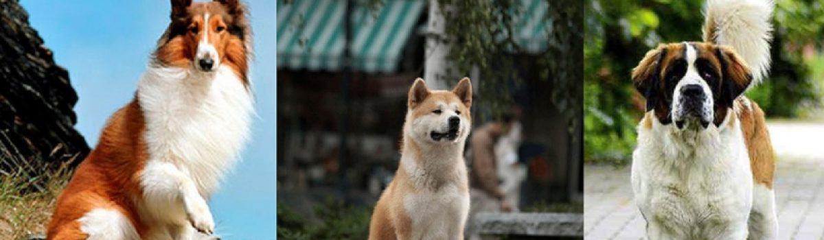 Entrenadores caninos