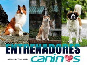 Entrenadores caninos @ Auditorio Aline S. de Aluja | Ciudad de México | México