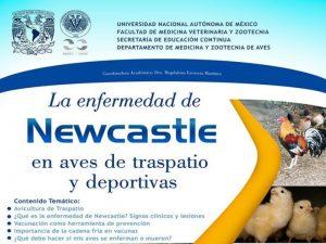 La enfermedad de Newcastle en aves de traspatio y deportivas @ Auditorio Pablo Zierold Reyes | Ciudad de México | México