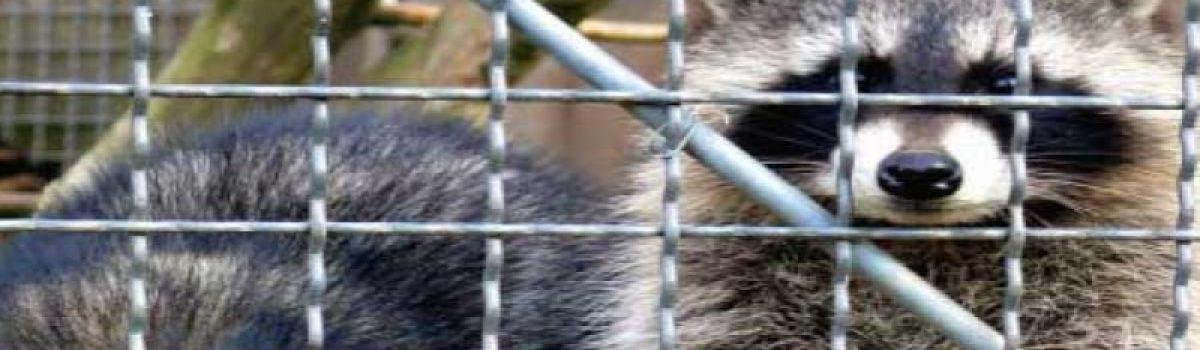 Derecho Animal y Derechos de los Animales