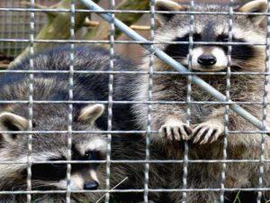 Derecho Animal y Derechos de los Animales @ Aula Niceto Alcalá-Zamora | Ciudad de México | Ciudad de México | México