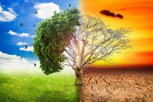 Uso de herramientas ecológicas y numéricas para evaluar impactos del Cambio Climático en sistemas biológicos @ Auditorio Dr. Julián Adem CCA | Ciudad de México | Ciudad de México | México